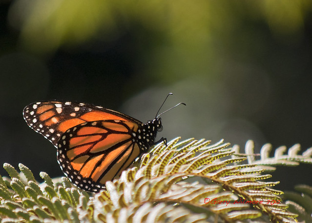 Butterfly Balboa Park San Diego Taken Early In The