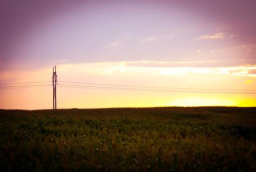 pink sunset summer sky sol field minnesota golden evening corn tramonto estate purple farm country july peaceful calm pasture julio verano campo twincities plains maize luglio woodbury project365 nikond80 365photos