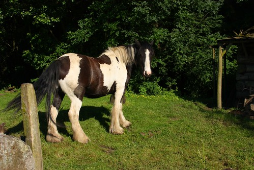 Horse in Beeley