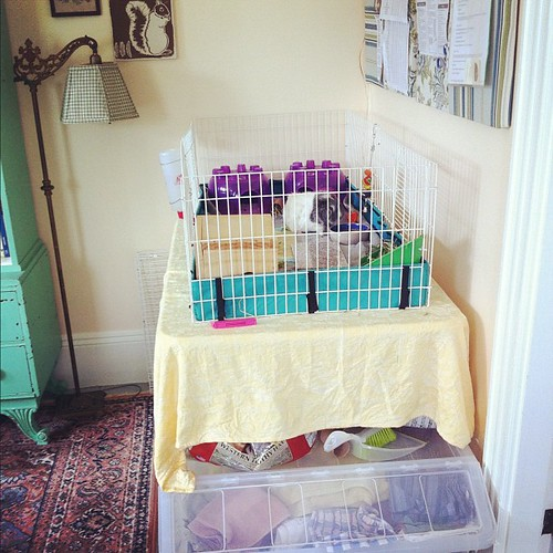 room for guinea pigs, too #unschooling #creativespaces #studio #pets #organizedmess #interiors