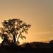 Sunset_1438.jpg