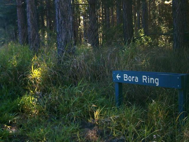 Bora Ring