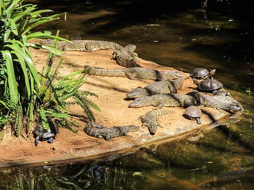 Le Parc des Oiseaux d'Iguaçu: des tortues et de petits caïmans