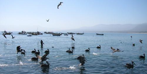 Aves en movimiento