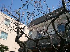 桜が咲いた