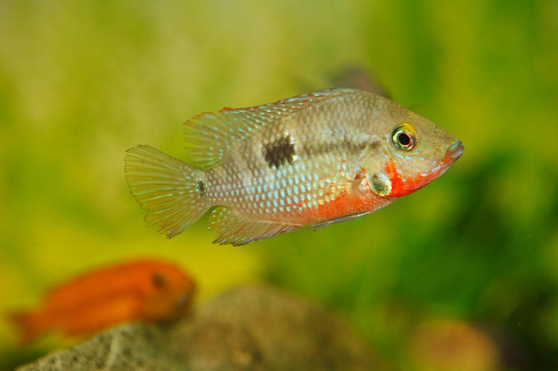 Аквариумные рыбки, фото