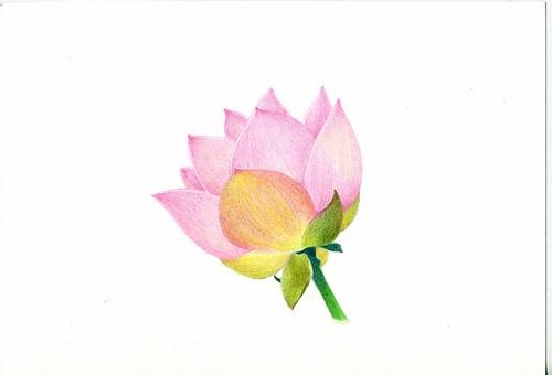2012_04_29_lotus_02