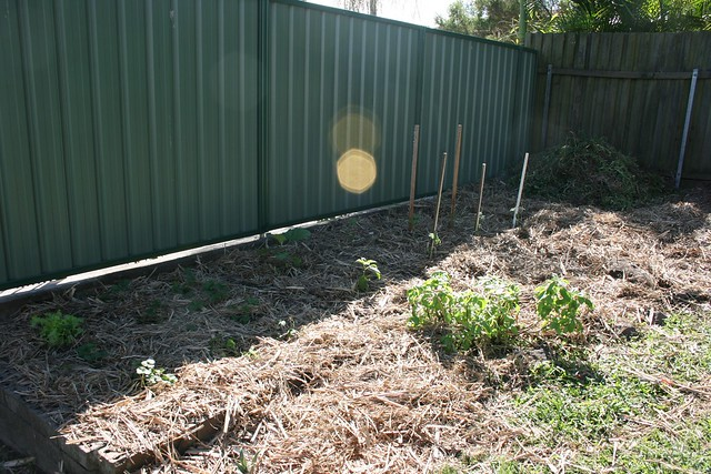Mulched veggie patched