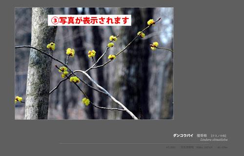 栗山で知らない花を見つけたとき、役立つサイトを知りました NikkoToday