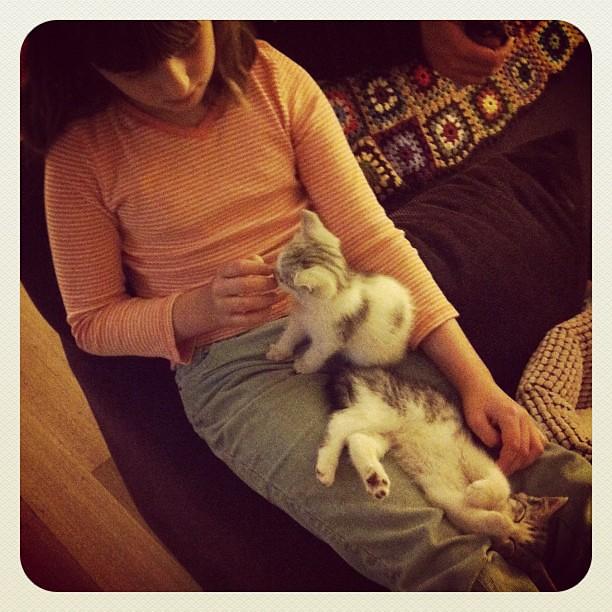 Oops... #kittens #owlets