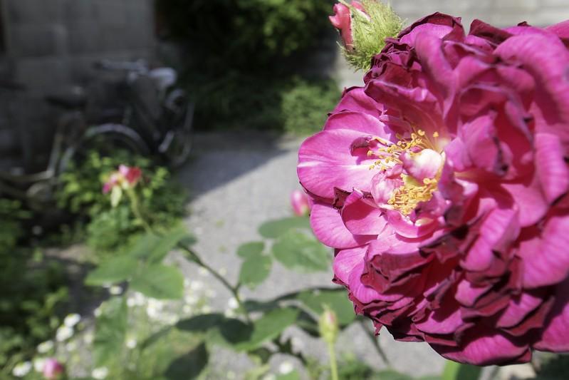 花のマクロ練習01