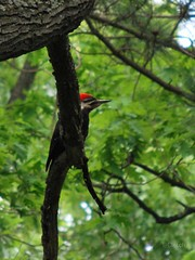 animal, rainforest, branch, leaf, tree, green, fauna, jungle, woodpecker, bird, wildlife,