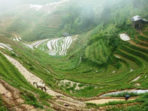 C-Guangxi-Pingan-Terrasse des 7 etoiles (76)