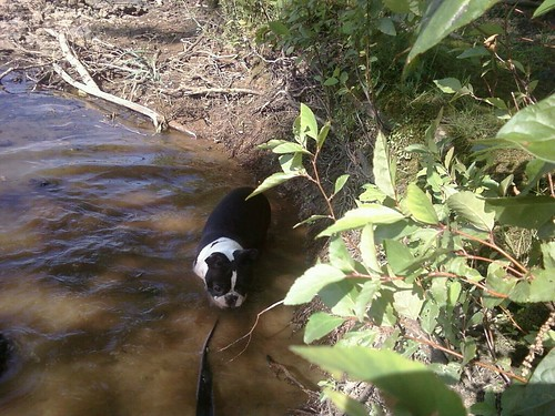 Charlie River June 2012 (2)