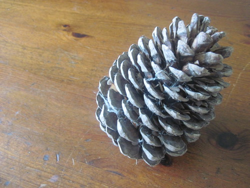 James Collected This Pinecone From Brownsea Island When He Was A Kid