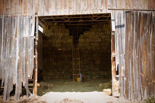 Polyface Farm 2012-0119.jpg