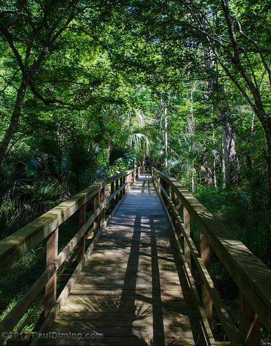landscape us spring florida boardwalk rivertrail dixiecounty levycounty lowersuwanneenationalwildliferefuge dixiecountyflorida d7000 lowersuwannee lowersuwanneenwr pauldiming levycountyflorida suwanneeriverestuary