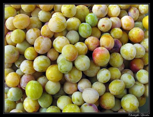 Mirabelles (Prunus domestica syriaca)
