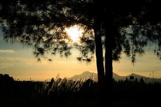 Morning in Tagaytay