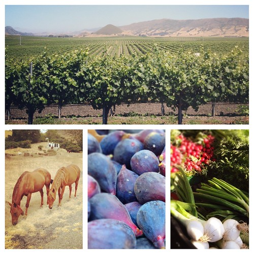 Fresh Air in San Luis Obispo- Vineyards, Horses and Farmers Market-Instagram Review