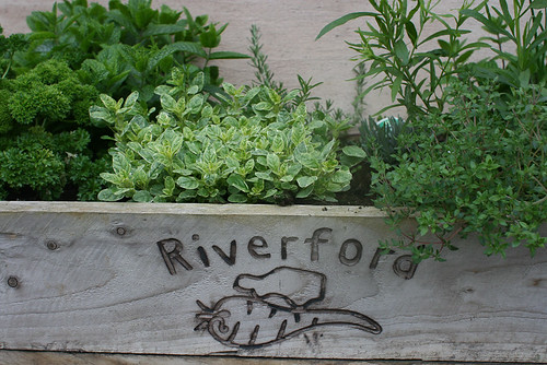 Riverford Farm Tour