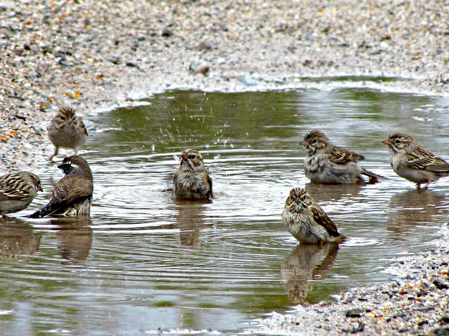 Saguaro National Park Birds