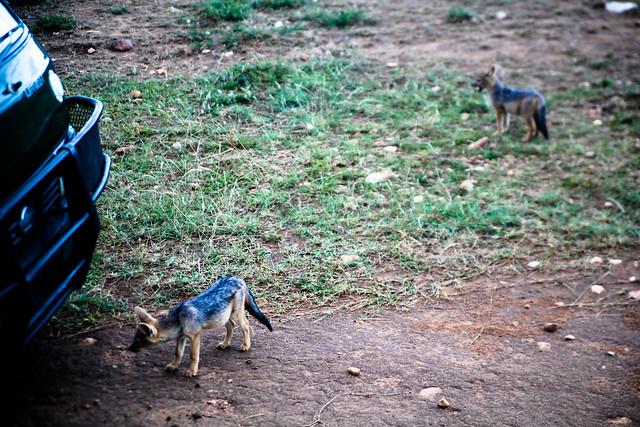 Maasai Mara-4