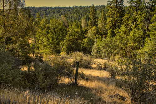 summer northerncalifornia landscape summertime nevadacityca summerscene nevadacountyca canon7d lightroom4 deercreektributetrail topazsw