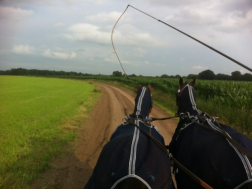 Riding a two-horse carriage around the woods in Ommen