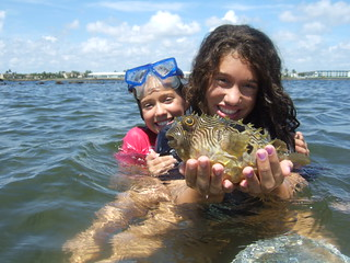 Davina with a striped burrfish.