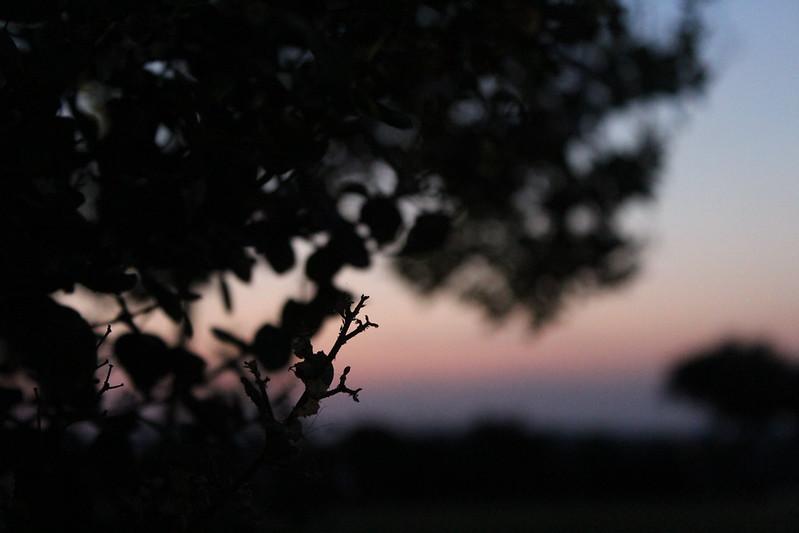 ere the sun rises.