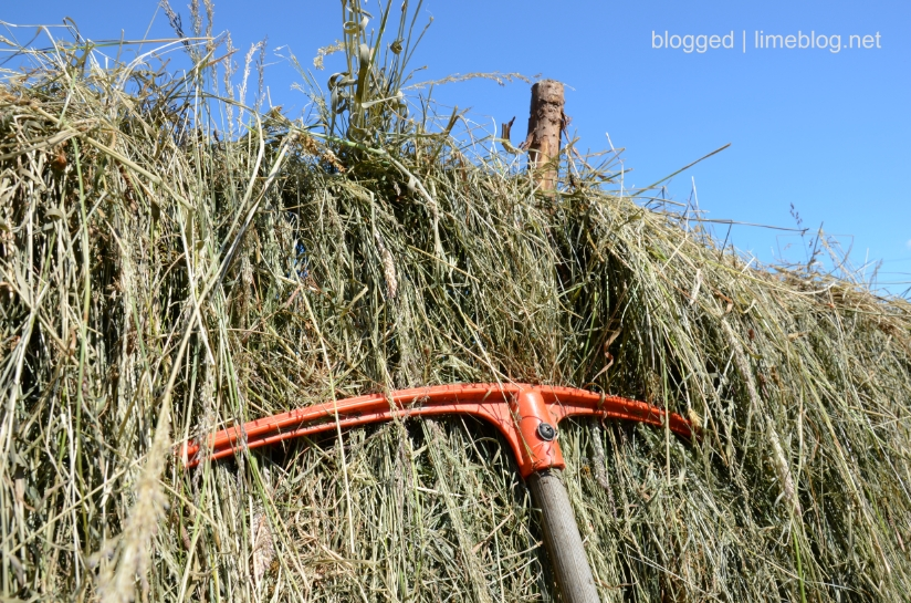 summer vacation 2012 | drying hay