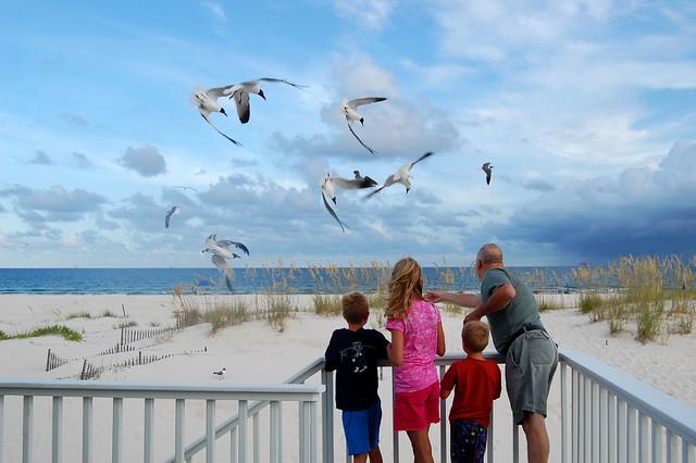 feeding the gulls AL
