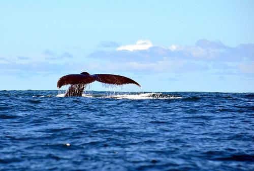 Ver ballenas en el pacífico colombiano, CHECK!!! by Milo Orozco