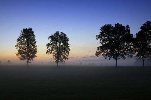 blue trees sky mist tree yellow fog clouds sunrise landscape dawn purple tn jackson pre