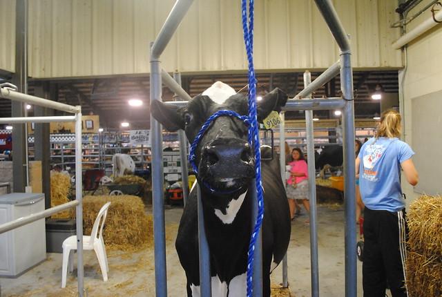 Miller County Fair