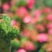 Cactus by Yavanna Warman {off}