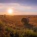 English countryside - Shrewton, United Kingdom - Landscape photography by Giuseppe Milo (www.pixael.com)
