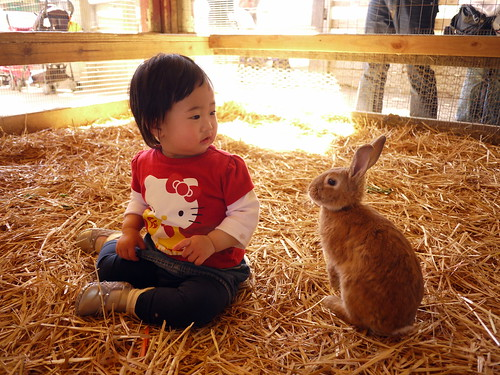 120303 Zoomars Petting Zoo