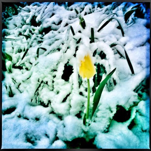 渥太华的春天可能会变幻无常