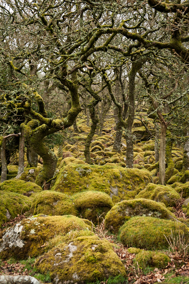 Ancient Oak Woodland