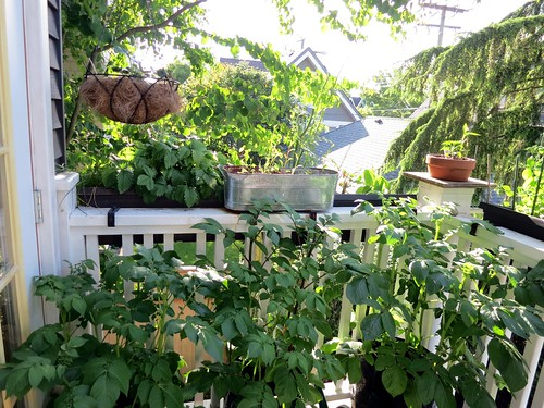 Growing a snack bar on the deck
