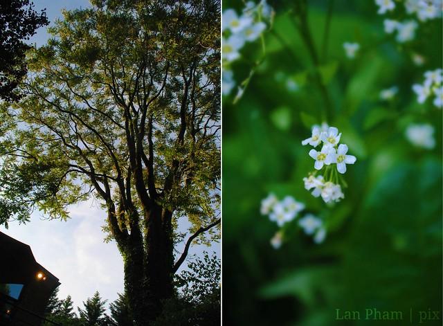 tree + flowers