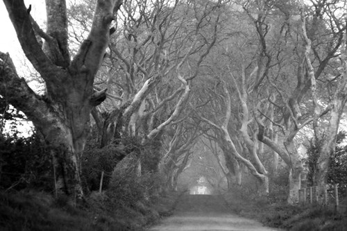 Dark Hedges, Hail Storm