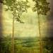 Weißt du, dass die Bäume reden? ... by Mara ~earth light~