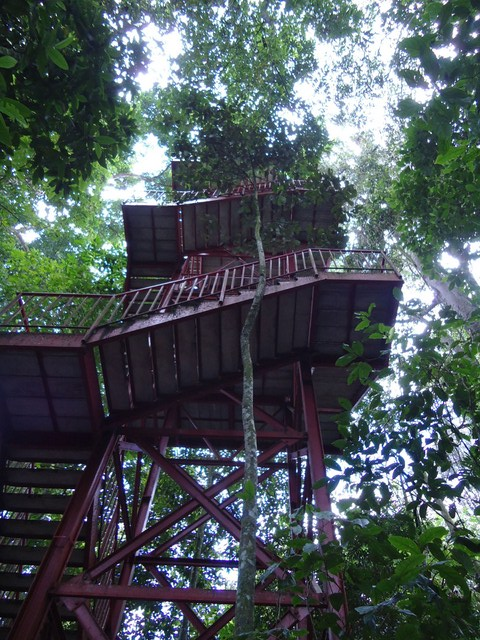 Imagen del Mirador en el Jardín Botánico del Quindio
