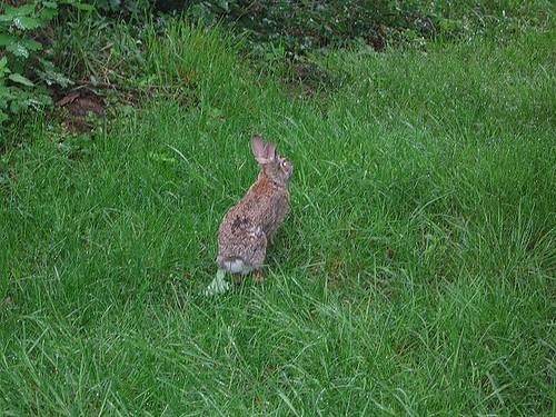Bad news bunny. by Leenechan