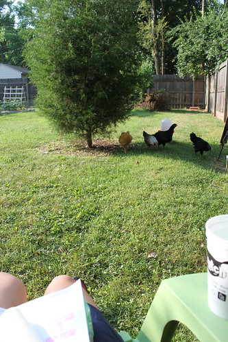 20120526. After all that Americanism, I needed to go relax with the chicks for a while.