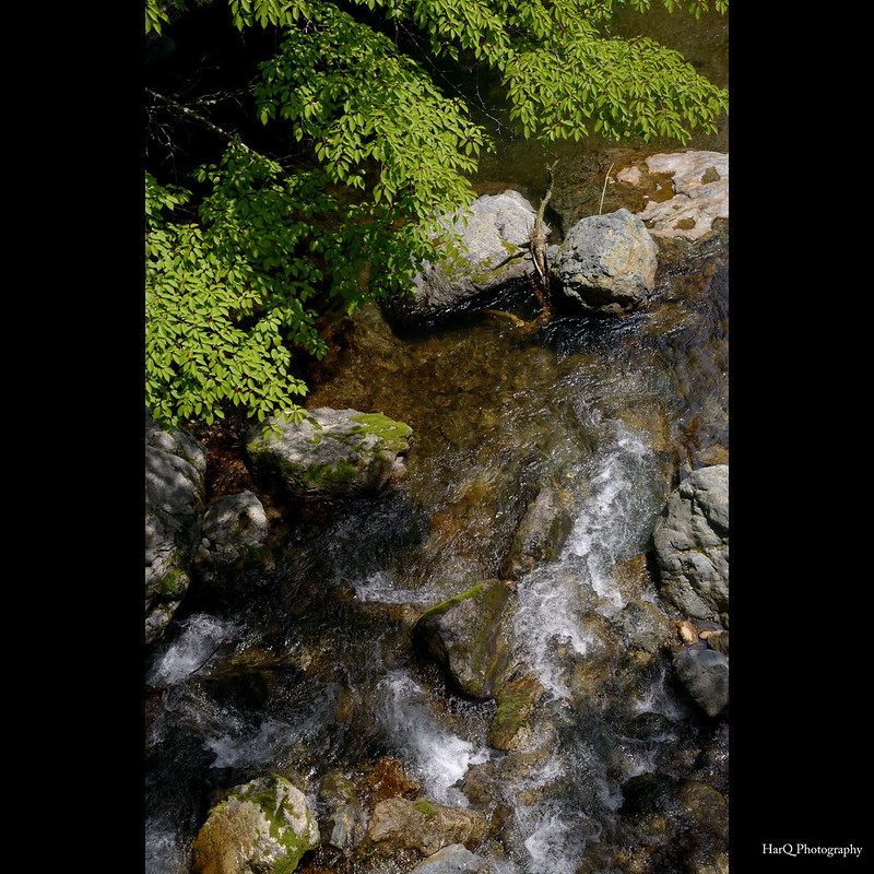 Mountain stream of fresh green *