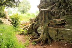 Croome Court - old tree trunk